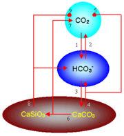 Circulación geoquímica del carbono